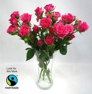 160620_Fairtrade_Roses_Aldi_8b134f79e54533a3ee99ebf931c417d4
